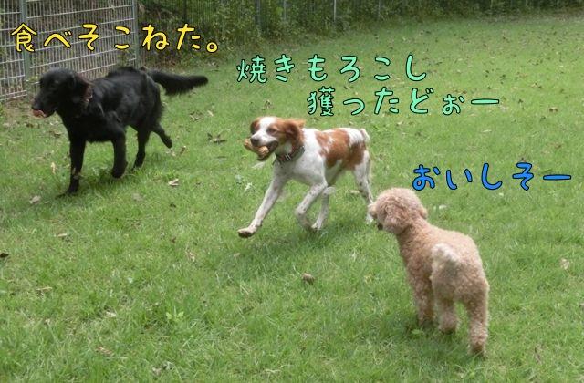 CIMG5903.jpg