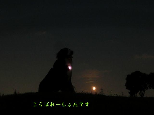 CIMG6109.jpg