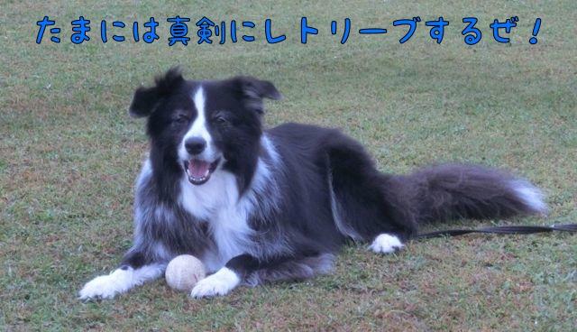 CIMG6455_20151018160842d1d.jpg