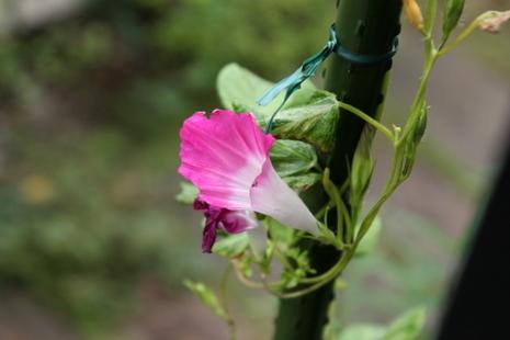食べられた花