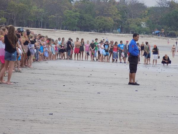 クタ ビーチの孵化した ウミガメの放流