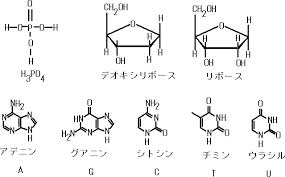 DNA要素