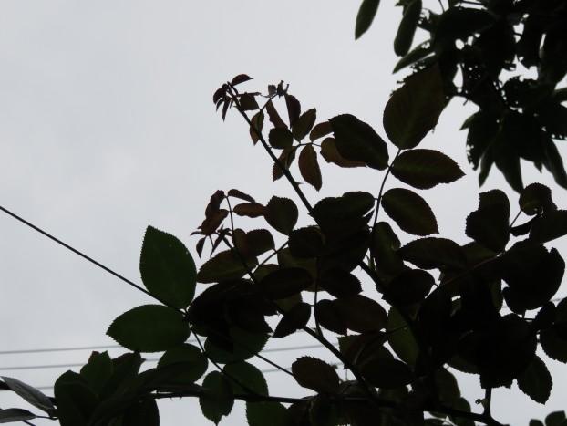 びぃなむ0904-08