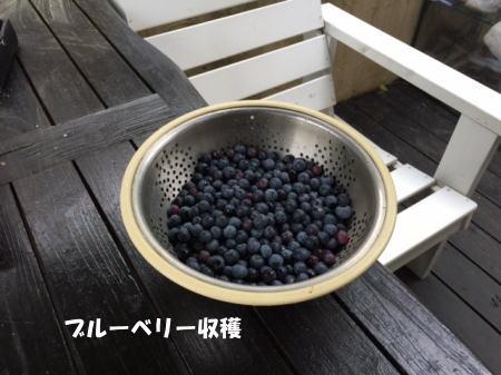 20150821_5.jpg
