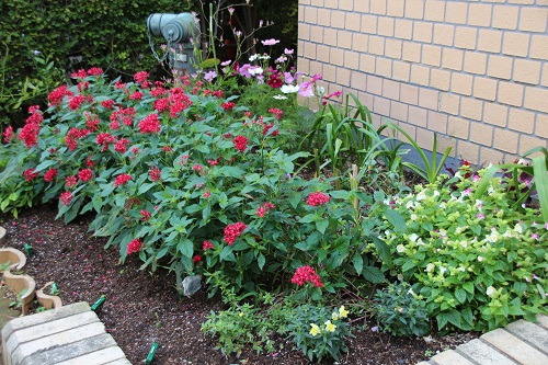 IMG_4967 my garden
