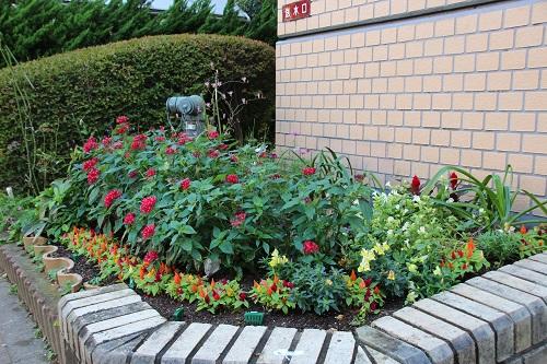 IMG_5197 s my garden