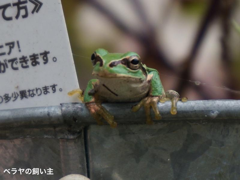 BNK_frog_DSC07038.jpg