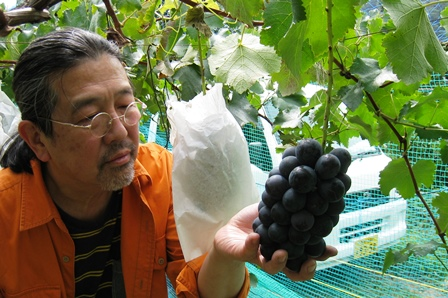 201509chikuma-purple-chef.jpg