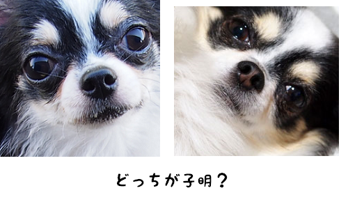 20150903103739eb1.png