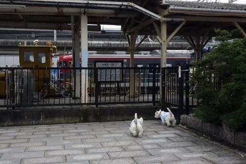 karuizawaekitohondorihajimete1.jpg