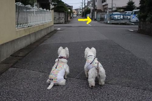 shobosyanihannousurunohaotoko3.jpg
