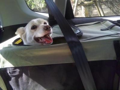 ドライブ!
