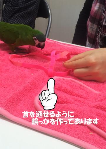 りこぽんちゃん20151007-5