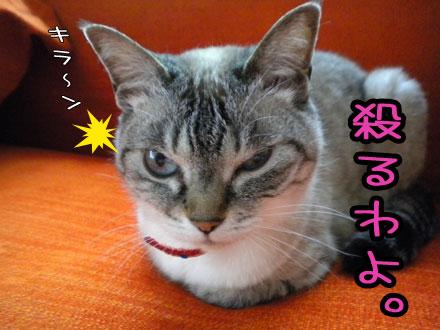 leochanokoru.jpg