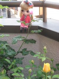 rose2013-1+218_convert_20150906133010.jpg