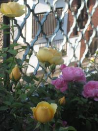 rose2013-1+266_convert_20150906132859.jpg