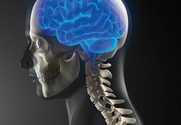 トラウマ 脳 33