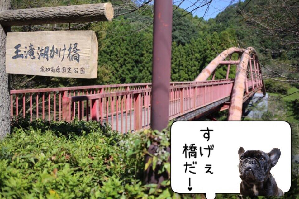 フレンチブルドッグ お出掛け 王滝渓谷 1