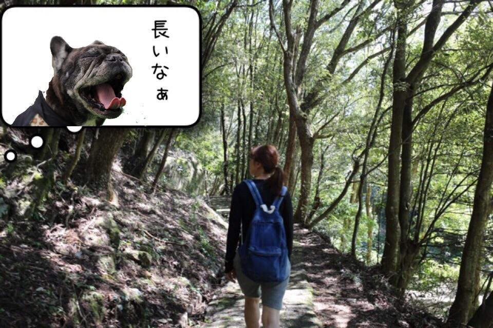 フレンチブルドッグ お出掛け 王滝渓谷 3