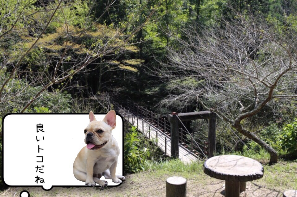 フレンチブルドッグ お出掛け 王滝渓谷 4