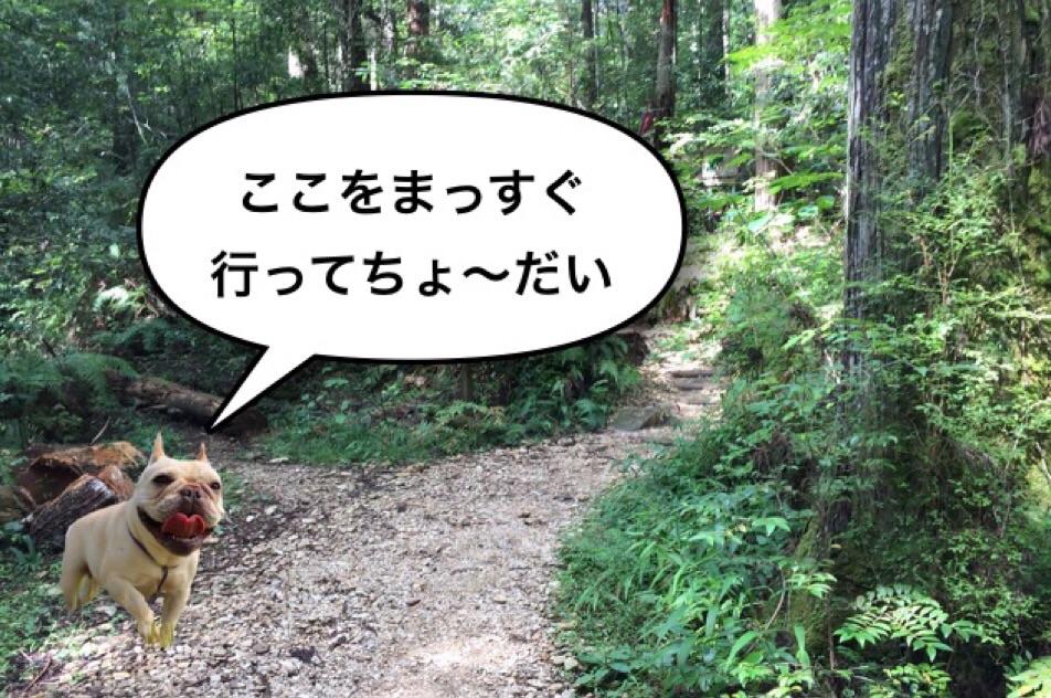 フレブル ハイキング 秘境 渓谷 4