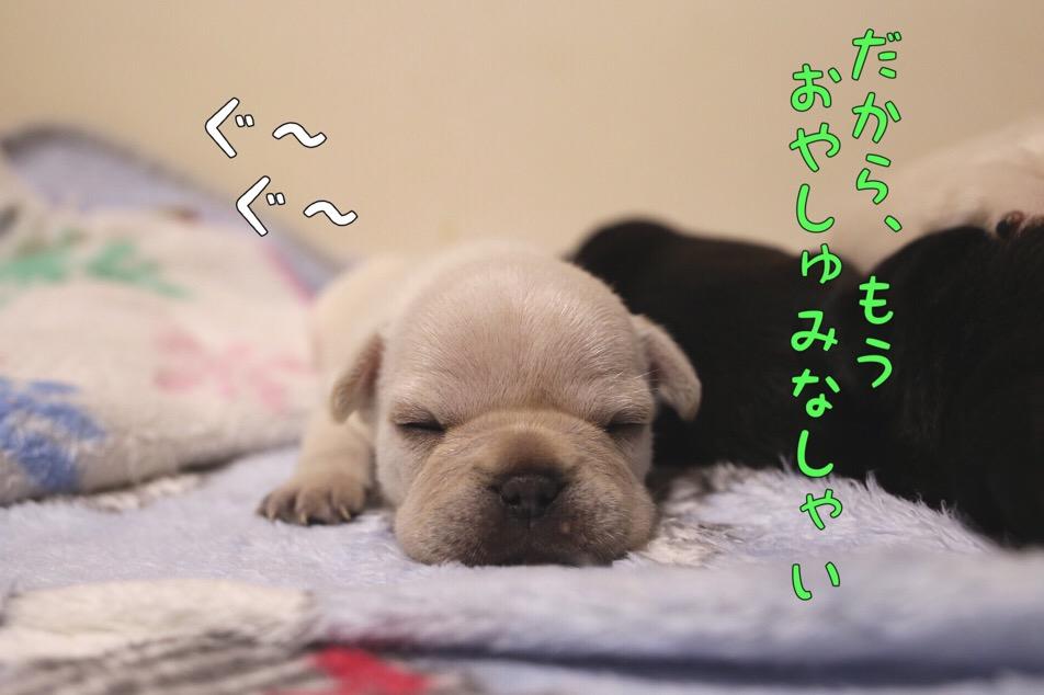 フレブル クリーム チャンピオン直子 眠い 2