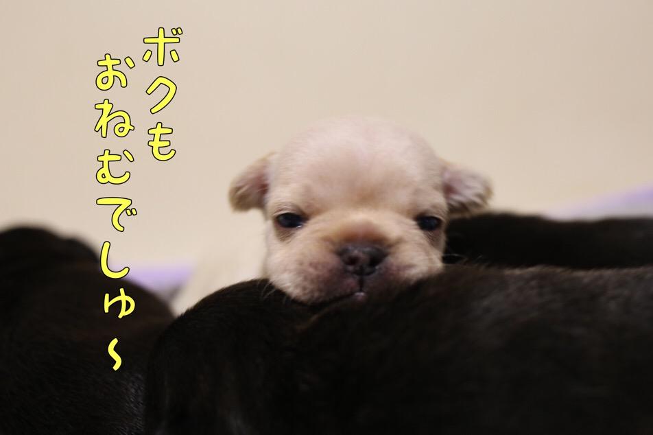 フレブル クリーム チャンピオン直子 眠い 3