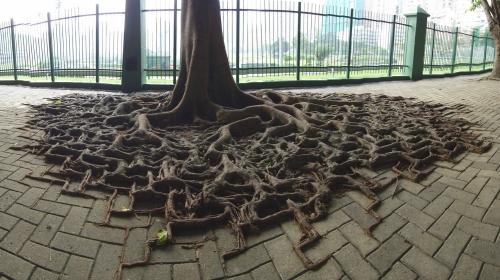 タイルの目に沿って生える木の根3