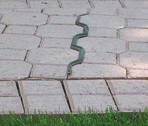 タイルの目に沿って進むヘビ