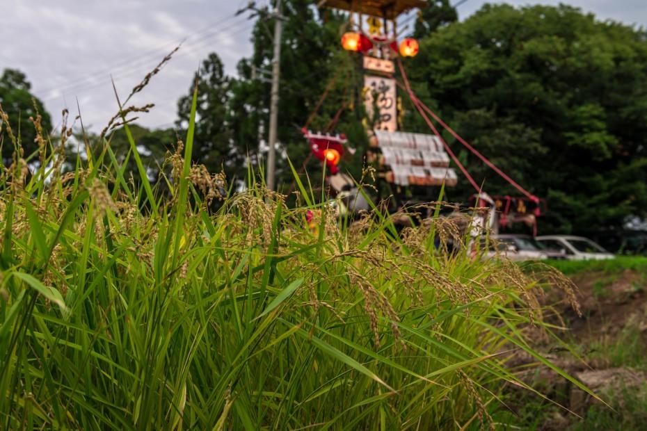 2015.09.16小泊秋祭り9
