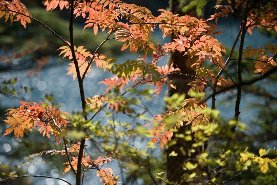 2015.10.03志賀高原池めぐり17