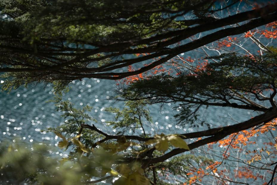 2015.10.03志賀高原池めぐり16