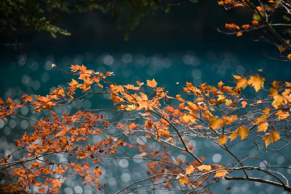 2015.10.03志賀高原池めぐり15
