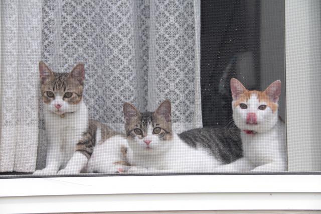 窓辺の猫たち1