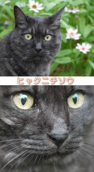 目がハート