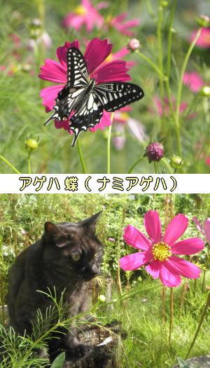 蝶も舞うよ