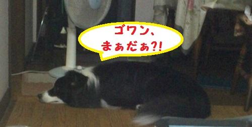 s-_20150901_183231.jpg