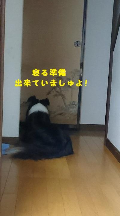 s-_20150911_134806-1.jpg