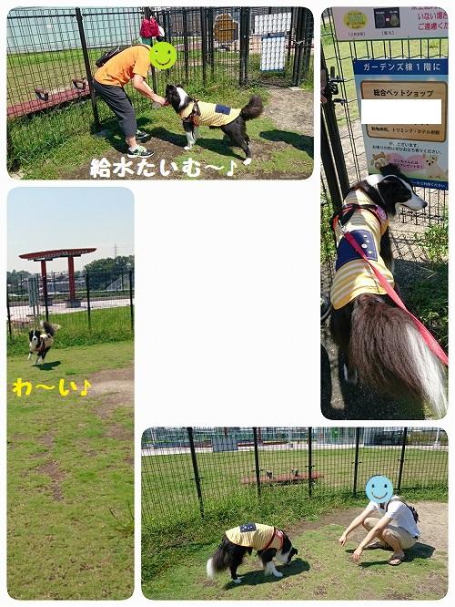 s-_20150913_201326.jpg