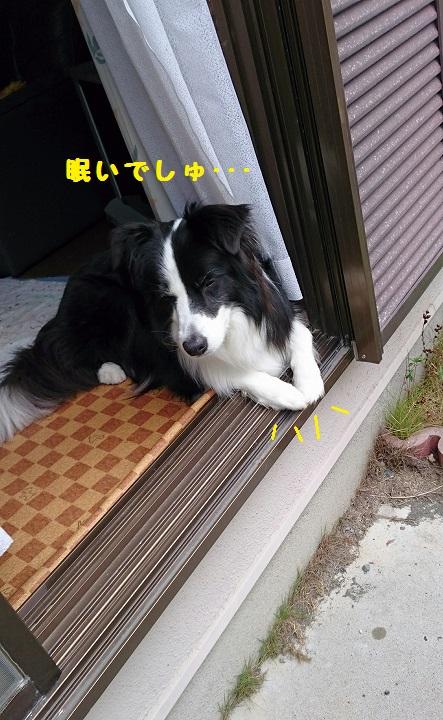 s-_20151010_192432.jpg