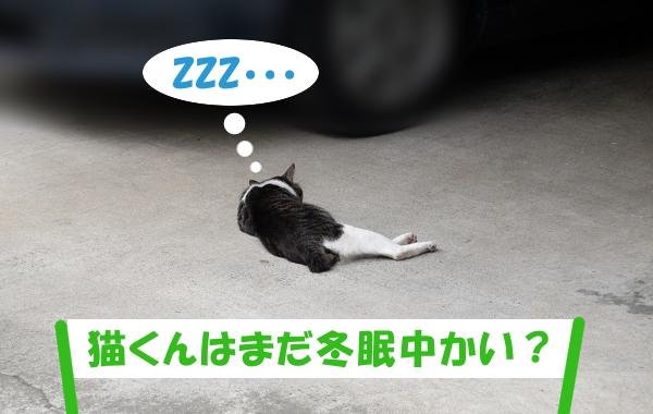 ZZZ・・・ 「猫くんはまだ冬眠中かい?」
