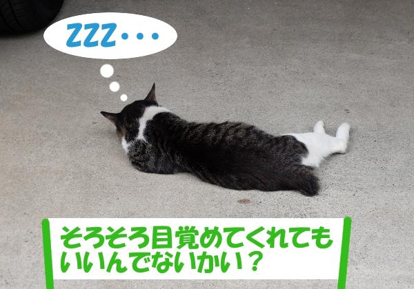 ZZZ・・・ 「そろそろ目覚めてくれてもいいんでないかい?」