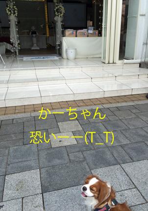 20150926-18.jpg