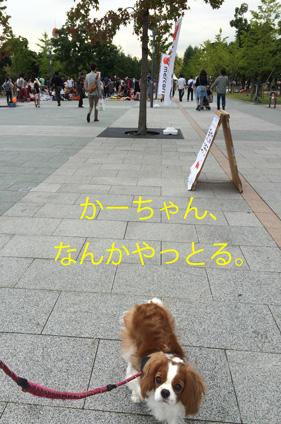 20150926-5.jpg