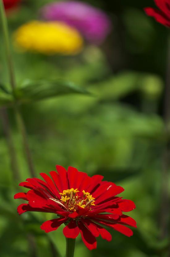 花の都-411