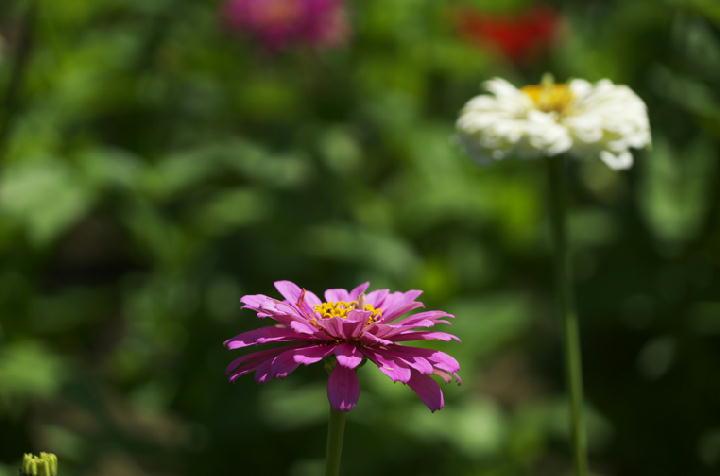 花の都-410