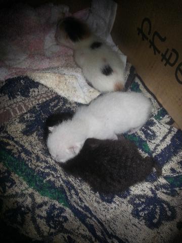 子猫 生後1日
