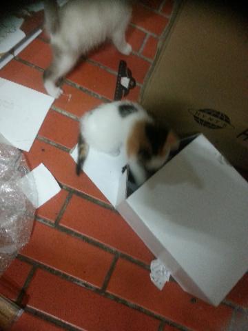 箱をめぐる戦い 2