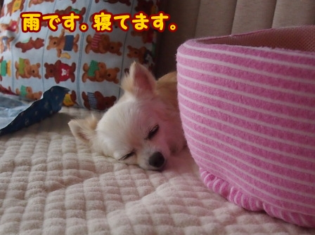 blog6663a.jpg