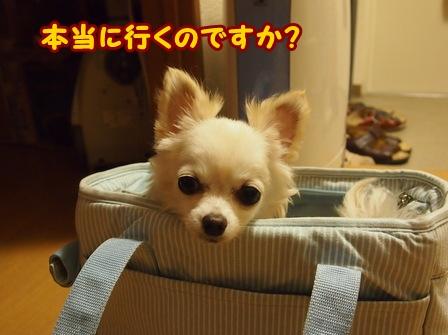blog6672a.jpg